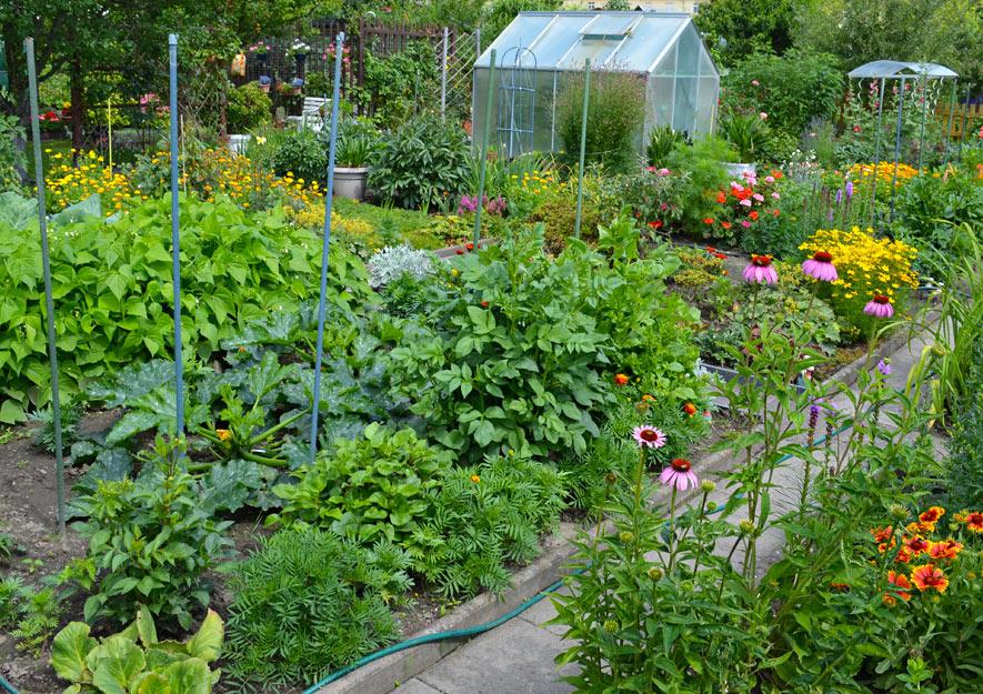 Naturnahes Gärtnern Kleingarten