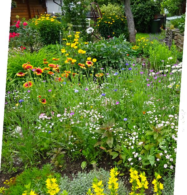 Kleingarten - Naturnahes Gärtnern