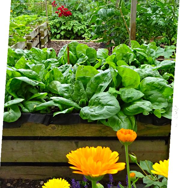 Naturnahes Gärtnern - Hochbeet Mischkultur
