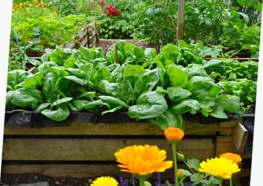 Naturnahes Gärtnern