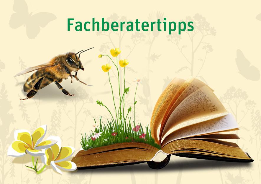 Fachberatertipps - Informationsblätter