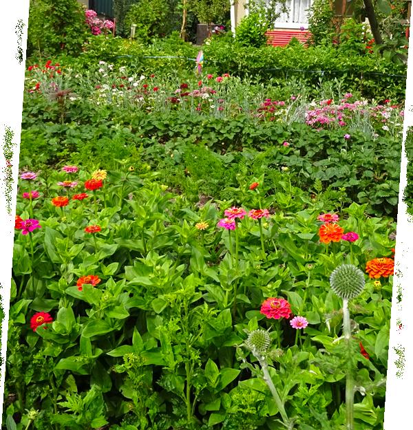 Mischkulturen naturnah gärtnern