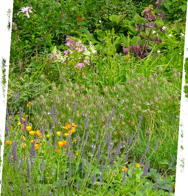 Naturnah gärtnern – Artenvielfalt Pflanzkulturen