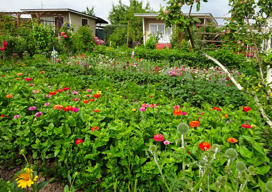 Naturnahes Gärtnern Mischkulturen