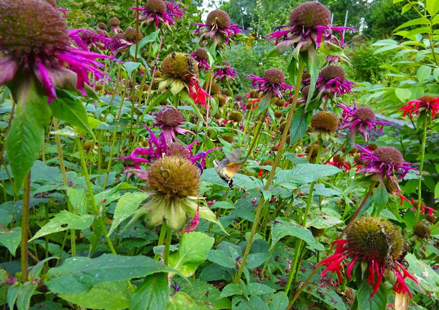 Naturnah gärtnern - Artenvielfalt Pflanzenleben