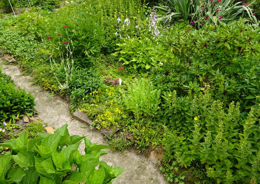 Naturnah gärtnern – Mischkulturen