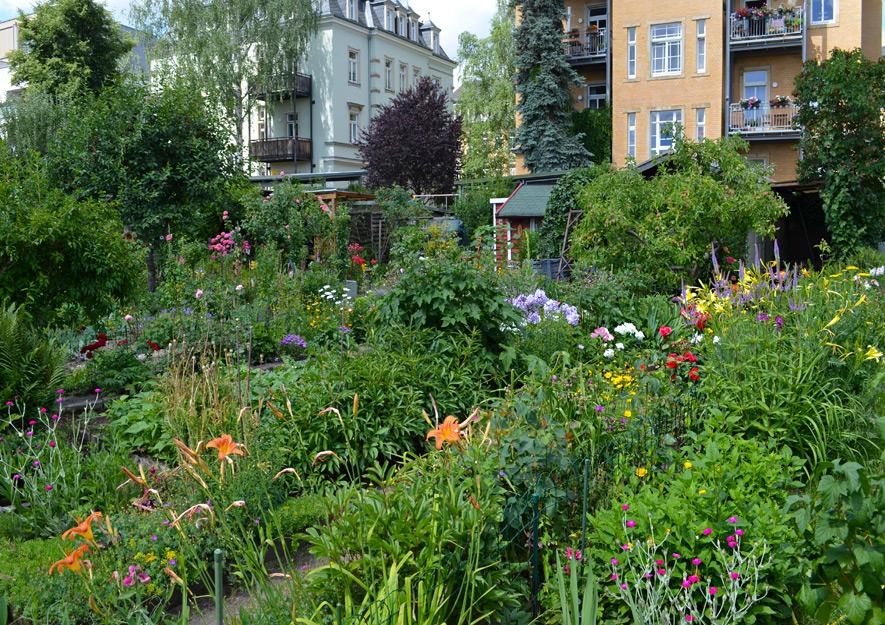 Blühende Blumen im Kleingarten