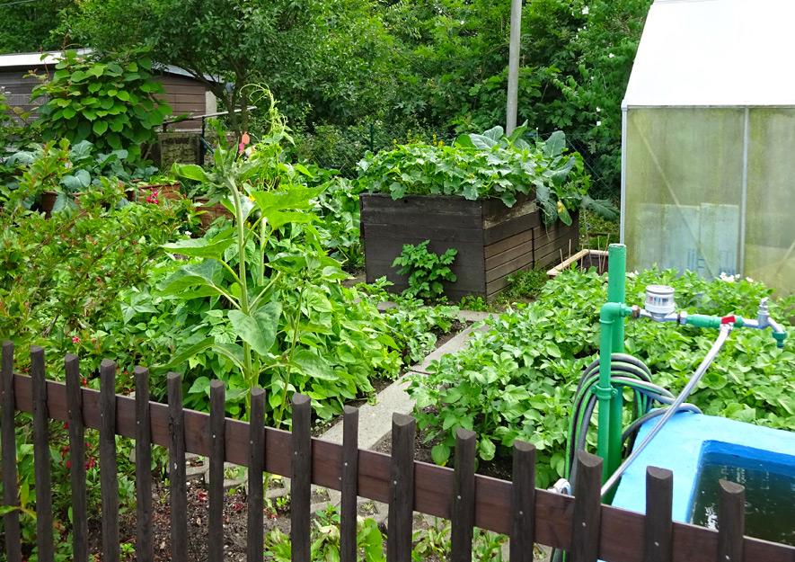 Gemüsekulturen und Nutzpflanzen