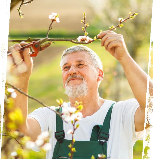 Gartenfachberater Ausbildung & Termine