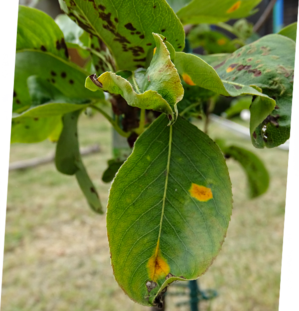 Verbotener und zulässiger Pflanzenschutz