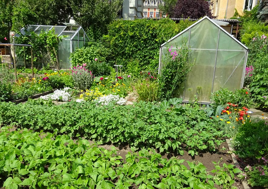 Riesiger Artenschwund bei Gemüsesorten