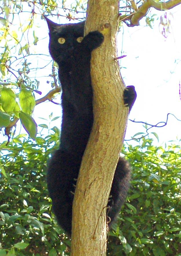 Hauskatzen und streunende Katen im Kleingarten