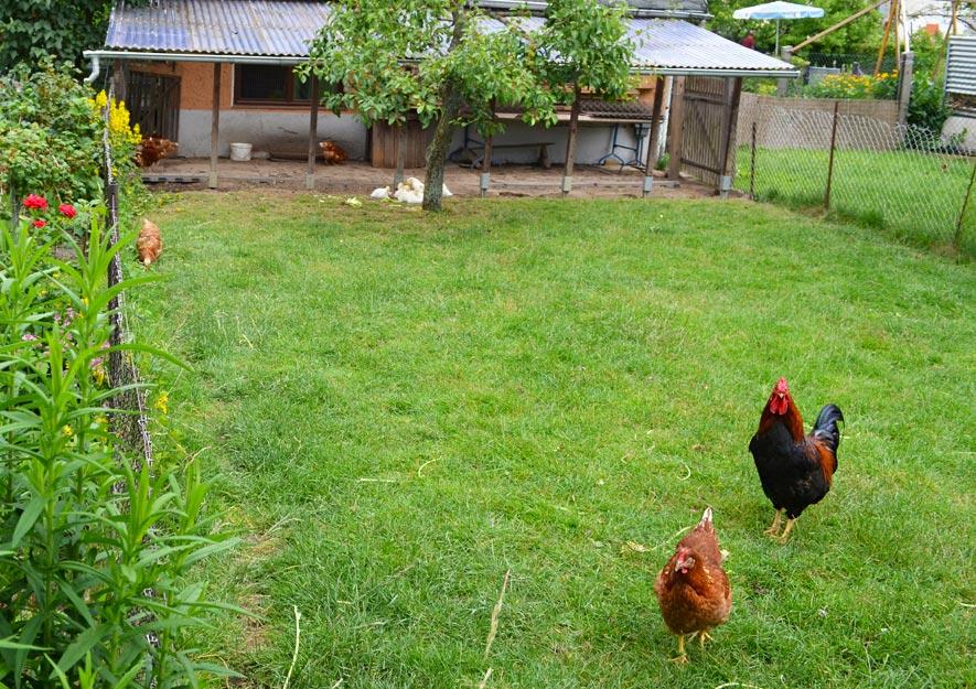 Kleintierhaltung im Kleingarten