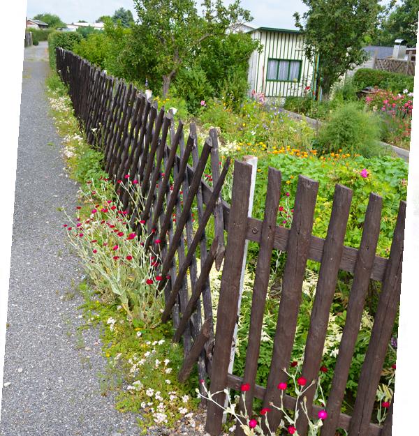 Wege, Hecken und Zäune im Kleingarten