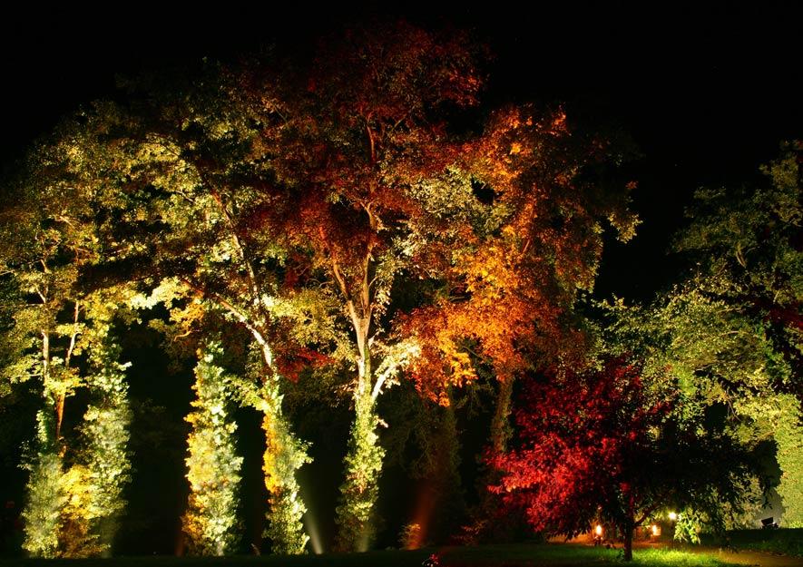 Lichtverschmutzung entgegenwirken - beleuchtete Bäume