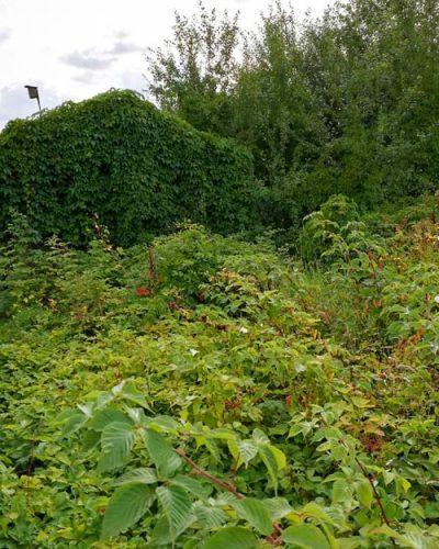 Naturnah oder naturbelassener Kleingarten