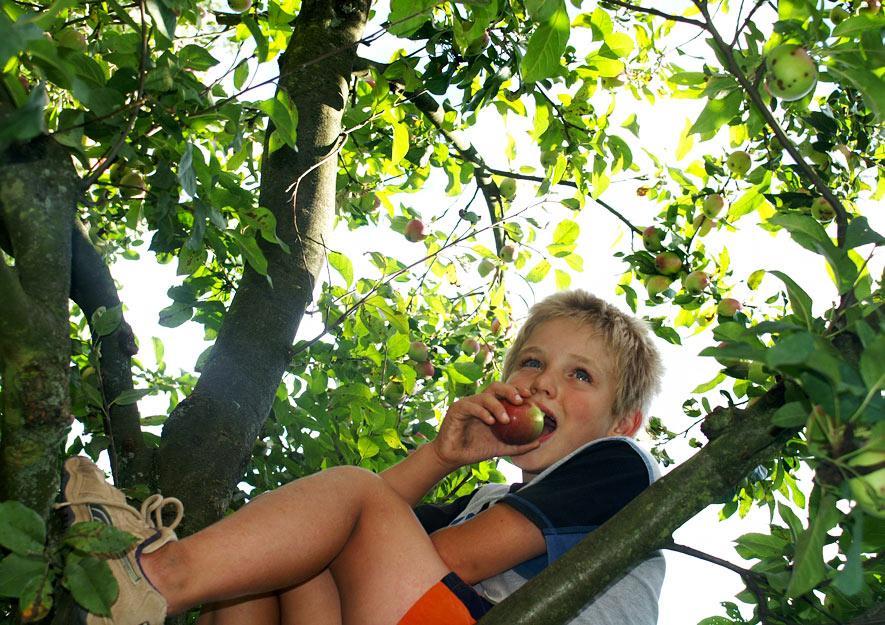 Obstbäume - Vitaminspender und Abenteuerspielplatz