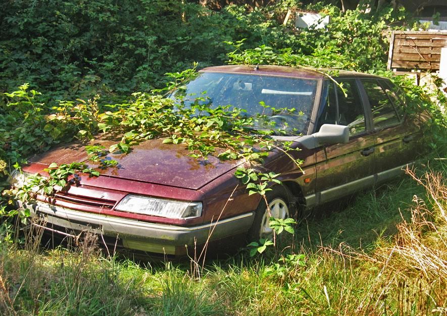 Autos im Kleingarten sind verboten
