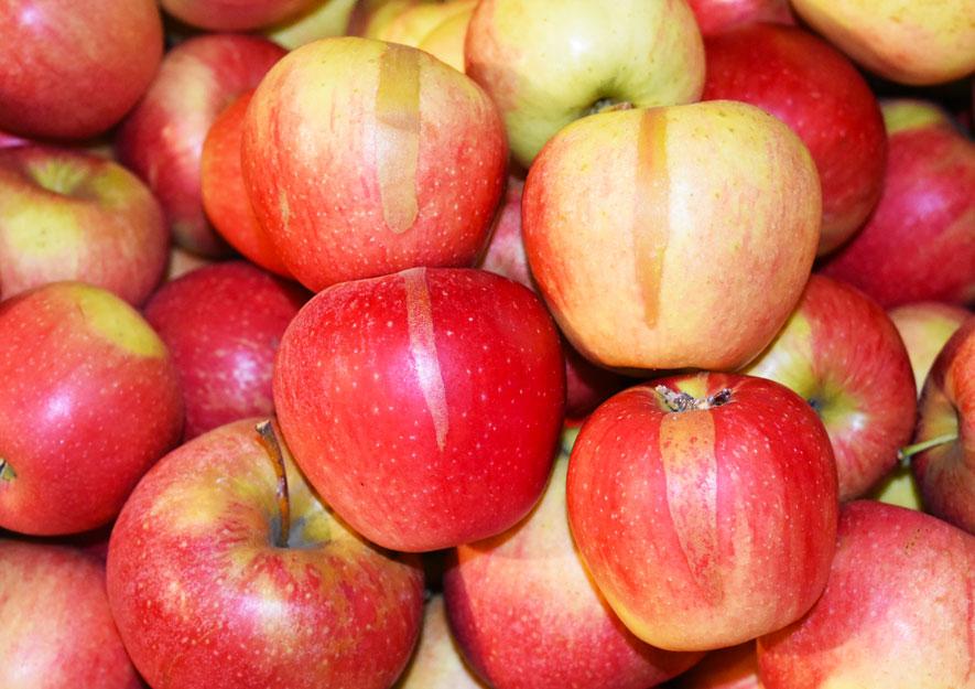 Frostzungen durch Spätfrost an Äpfeln