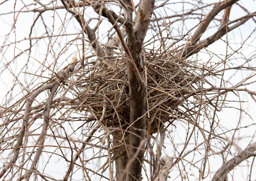Elsternet in einem Baum