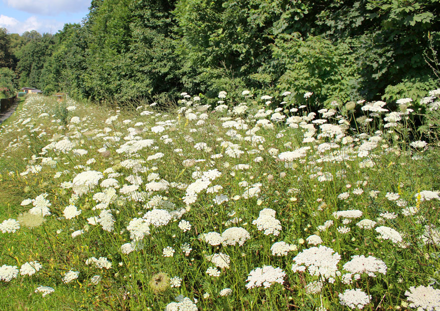 Größere Pflanzenvielfalt im Kleingarten